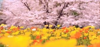 4/3開催! 恋活部イベント#3報告!!