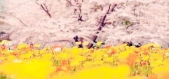 活動報告!5/15開催! 恋活部スピンオフイベント#2