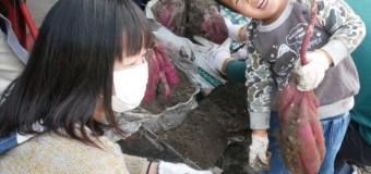 【⑧健康部】芋掘りに行ってきました(^o^)/